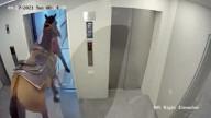 FEATURE - Mann versucht, sein Pferd in einen Aufzug eines Wohnblocks in Tel Aviv zu bringen