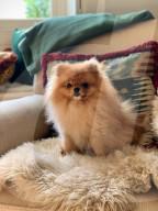 FEATURE -  Keine Corona-Beschränkungen für dieses Hotel: Das Hundehotel von Rebecca Linnell boomt wie nie zuvor