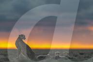 FEATURE - Wildtiere in Kenia vor atemberaubenden Sonnenauf- und -untergängen