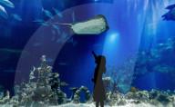 FEATURE - Das The Deep in Hull Aquarium in Yorkshire ist für Besucher wieder geöffnet