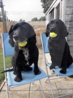 FEATURE -  Instinktiv: Barkeeperin Megan Hill lässt ihre Dates von ihren Hunden aussuchen