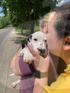 FEATURE - Schicksalswende: Connie Kim nimmt dreibeinigen unverkäuflichen Dalmatinerwelpen auf und rettet ihm damit das Leben