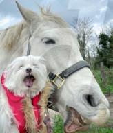 FEATURE - Pferd Victoria lässt seinen Hunde-Kumpel Teddy auf seinem Rücken reiten