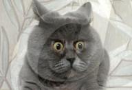 FEATURE - Katze Fedya sieht ständig überrascht aus