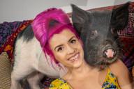 FEATURE - Während des Lockdowns hat die Anzahl der Minischweine in britischen Haushalten überproportional zugenommen