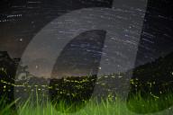 FEATURE - Millionen von Glühwürmchen erhellen ein abgelegenes Waldstück in Vietnam