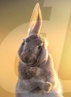 FEATURE - Ein junges Kaninchen sieht aus, als würde es telefonieren