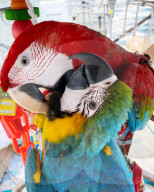 FEATURE - Piraten-Romane lassen grüssen: Madeleine und Herby Benavent segeln mit ihrem Hund Morty und den Papageien Charlie und Gerry über die Weltmeere