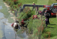 NEWS - Tierrettung: Feuerwehr rettet Pferd aus einem Wassergraben nahe dem britischen Beverley