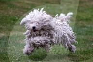 FEATURE - Hundesporttag in Sutton-under-Brailes