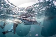 FEATURE - Auf Tauchgang: Martin Yelland begegnet einem Hai vor der Küste von Penzance