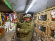 FEATURE - Mit mehr als 120 Tieren: BestattungsunternehmerAdam Collier wird Teilzeit-Meerschweinchenzüchter
