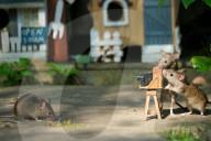 FEATURE - Verspielte Mäuse: Hobbyfotograf Gez Robinson zeigt was die kleinen Nager alles können