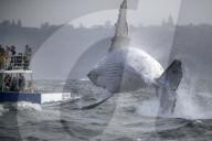 FEATURE - Eindrückliche Bilder vom Walbeobachten rund um den Globus