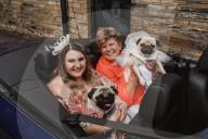 FEATURE -  Hiermit erkläre ich sie zu Mops und Mops: Hundehochzeit von Percy und Mabel in Brighouse