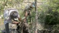 FEATURE - Tierschützer befreien einen Bären aus einem im Baum versteckten Netz in Armenien
