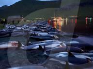 NEWS - Laut der Tierschutzorganisation Sea Shepherd sind 1428 Delfine auf den Färöer Inseln gefangen und getötet worden