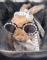 FEATURE - Butterscotch ist wohl das verwöhnteste Kaninchen der Welt