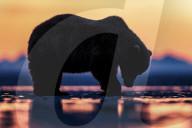 FEATURE - Bären suchen Nahrung bei Sonnenaufgang in Alaska