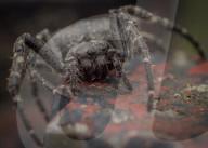 FEATURE - Ungeheuere Individuen: David Hamilton fotografiert Insekten und Spinnen