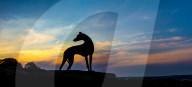 FEATURE - Schattenrisse: Hunde bei Sonnenuntergang