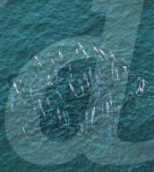 FEATURE - Delphine schwimmen in der Nähe von Paddelboardern