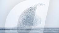 FEATURE - Seevögel zeichnen Figuren in den Himmel: Schwarmbildung an der britischen Ostküste nahe Snettisham