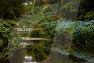 """FEATURE -  Malerisch schön: Die """"Monet""""-Brücke mit Hortensien in den Trebah Gardens"""