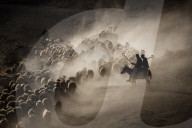 FEATURE - Schafe werden von Hirten zur Tränke geführt in Tatvan, Türkei