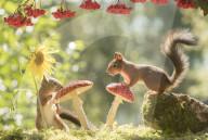 FEATURE - Eichhörnchen und Vögel turnen auf Pilzen