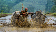 FEATURE - Büffelrennen auf West Java finden wieder statt